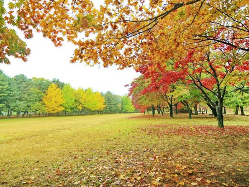 Day Trip to Nami Island with Petite France and Garden of Morning Calm