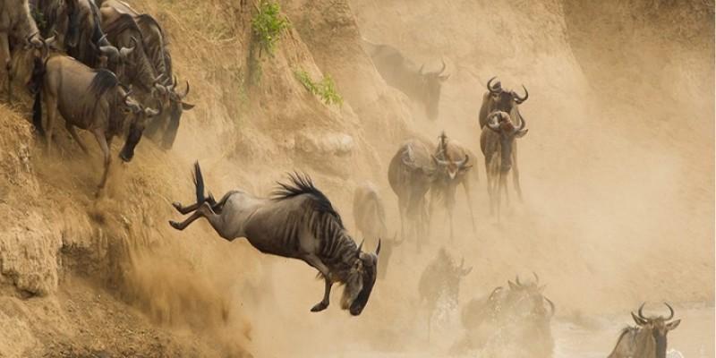 3 Days Joining Daily Departure Masai Mara Cheap Budget Safari