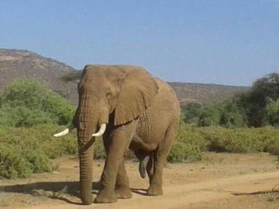 Face-off with Africa Big 5 at Masai Mara Safari