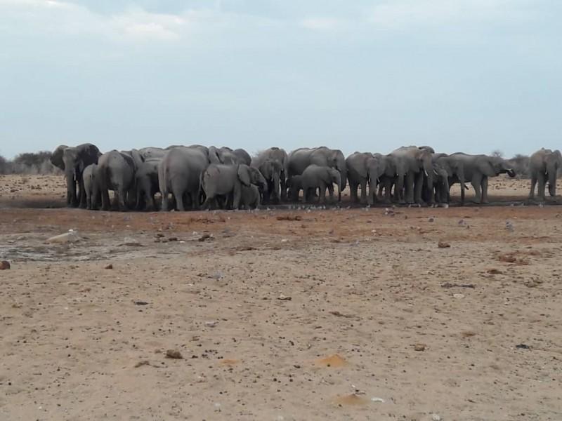 3 Days Camping tour at Etosha National Park