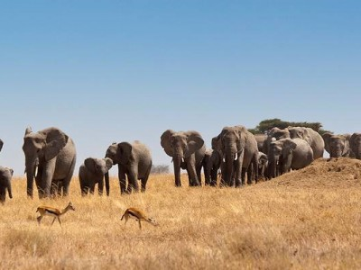 Tanzania Family Safari | 8 Day Family Safari in Tanzania with Reasonable Budgets