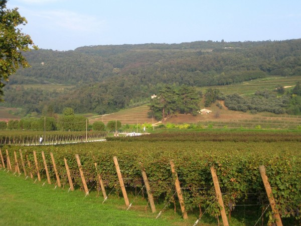 VALPOLICELLA, bike tour