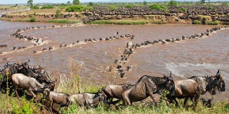 Enchoro Wildlife Camp 3 Days 2 Nights Masai Mara Safari