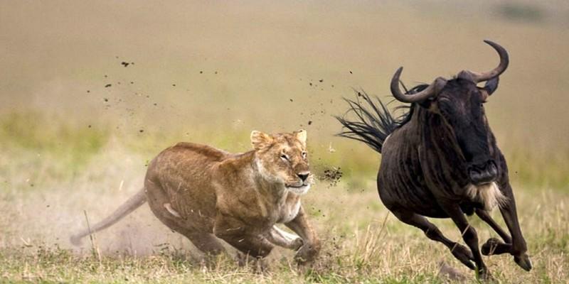 7 Days Kenya Adventure Camping Safari