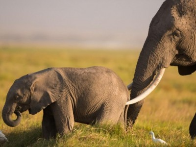 5 DAYS  KENYA SAFARIS