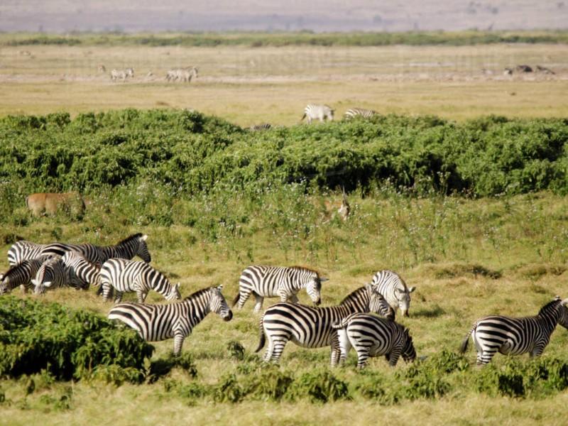 3 Days Amboseli Budget Package Camping Safari Holiday Tours