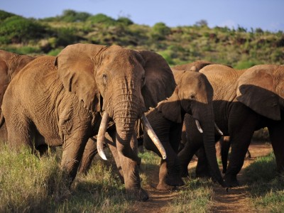 3 Days Amboseli Budget Package Camping Safari Holiday Tours