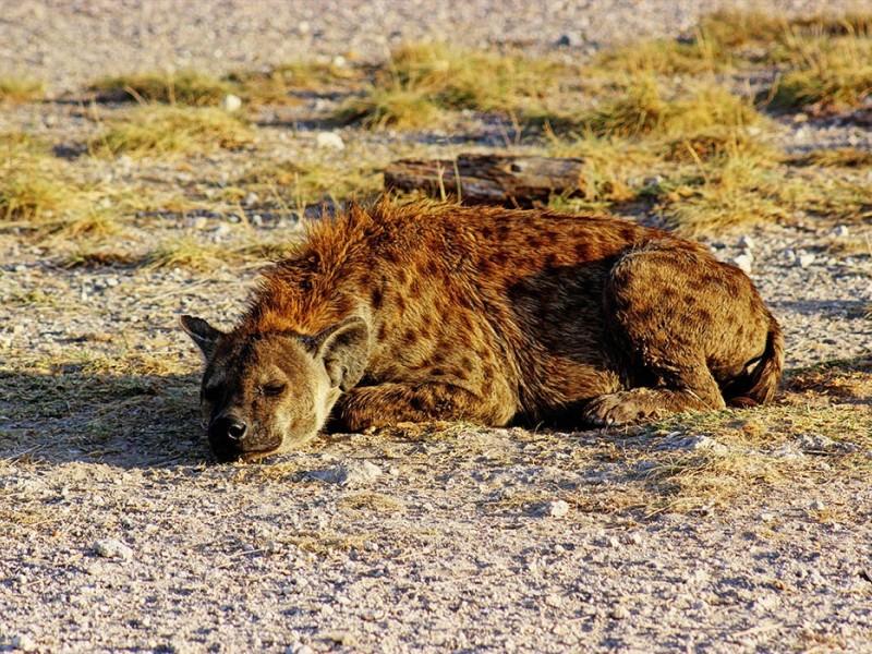 6 Days Budget Camping Safari