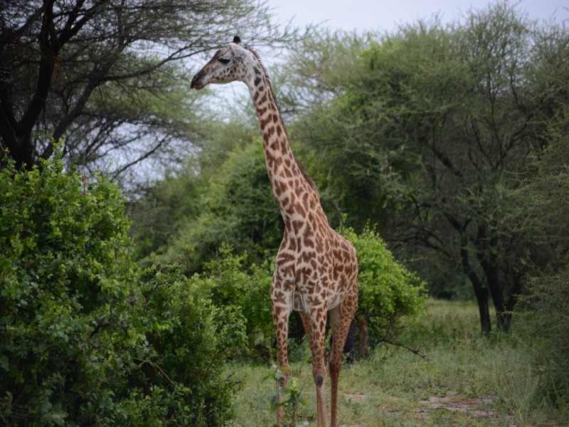 5 Days Amazing Tanzania Wildlife Safari