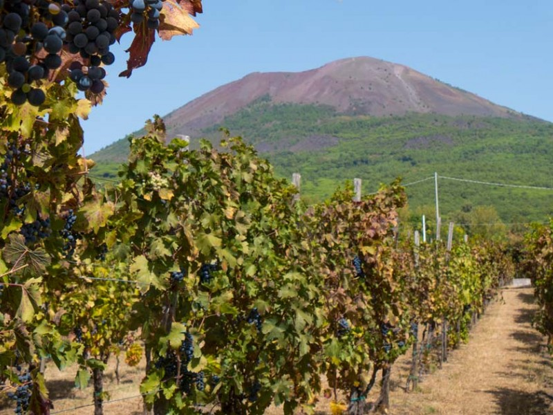 Pompeii & Wine - ALL INCLUSIVE