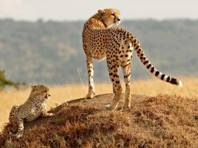 8 Days Best Of Kenya Safari