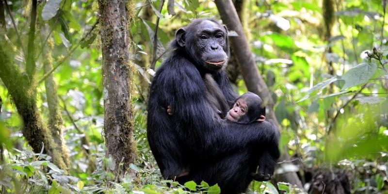 16 Days Uganda Gorillas, Primates, Culture & Wildlife Safari