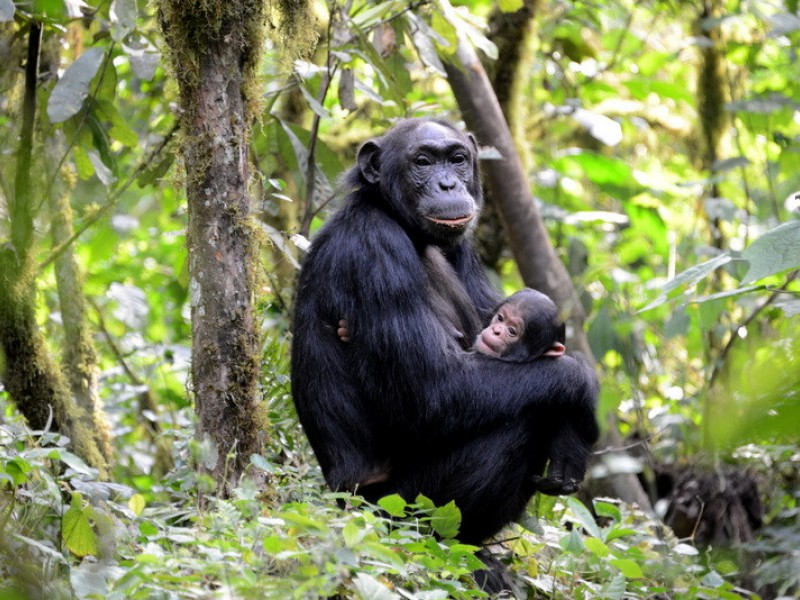 16 Days Uganda Gorillas, Primates, Culture & Wildlife Safari