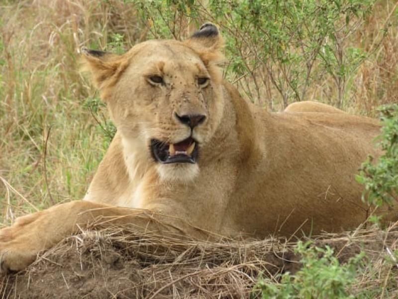 Explore The Amazing Aberdare Ranges & Scenic Kenya Parks