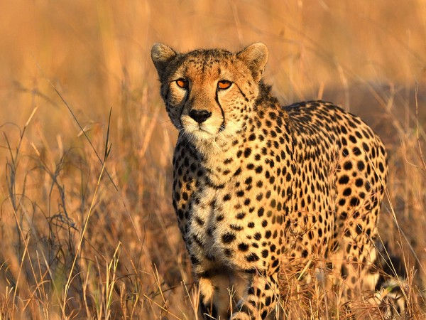 14 DAYS  KENYA  SAFARIS