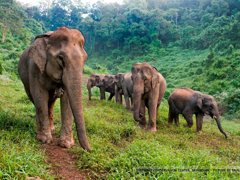 2 days / 1 night at the Elephant Conservation Center