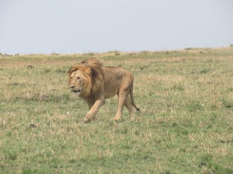 Discover Africa Wildlife & Sandy Beaches