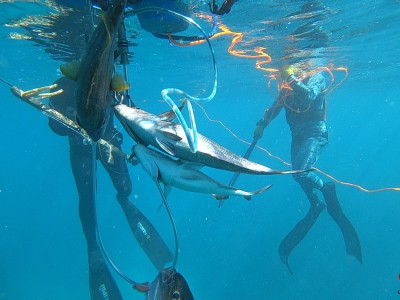 Reef Spearfishing in Punta Cana