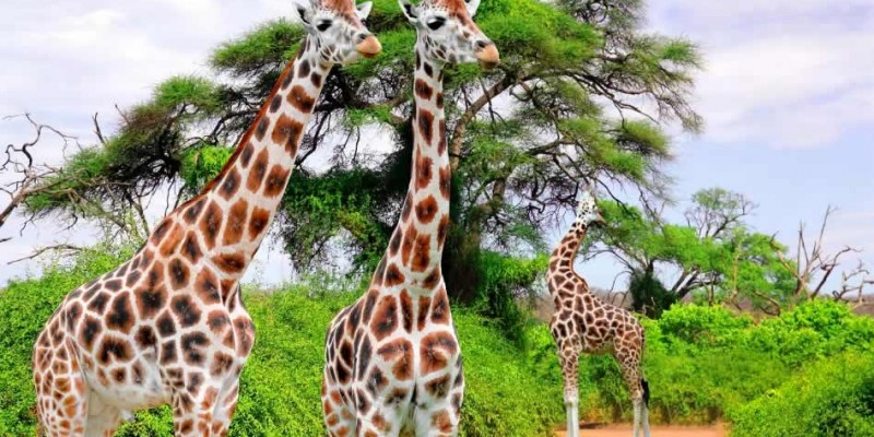 8 Days Solo Travelers Group Safari Holidays Tour Package
