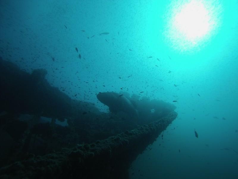 Scuba Diving Aliwal Shoal