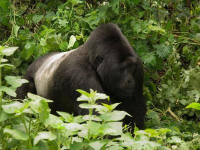 6 Days Explore Uganda Safari