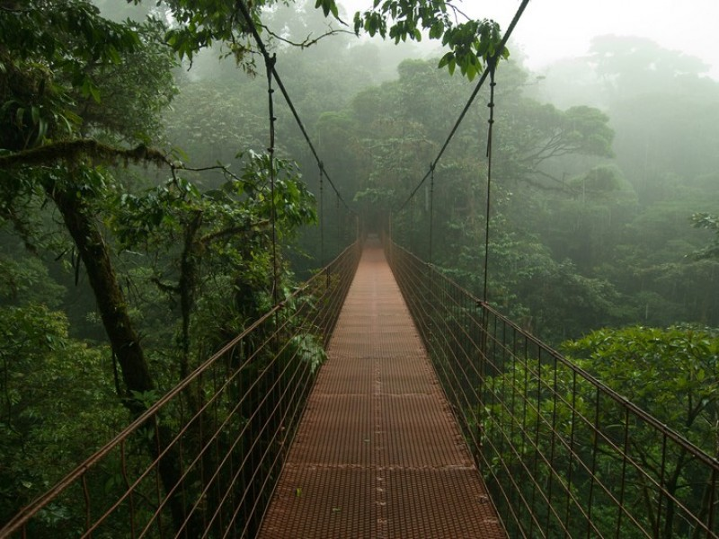 Monteverde Nature Reserve