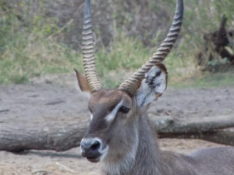 4 Days Safari tour itinerary for tanzania: Scout Through These National Parks Arusha, Tarangire National Park, Serengeti National Park, Ngorongoro