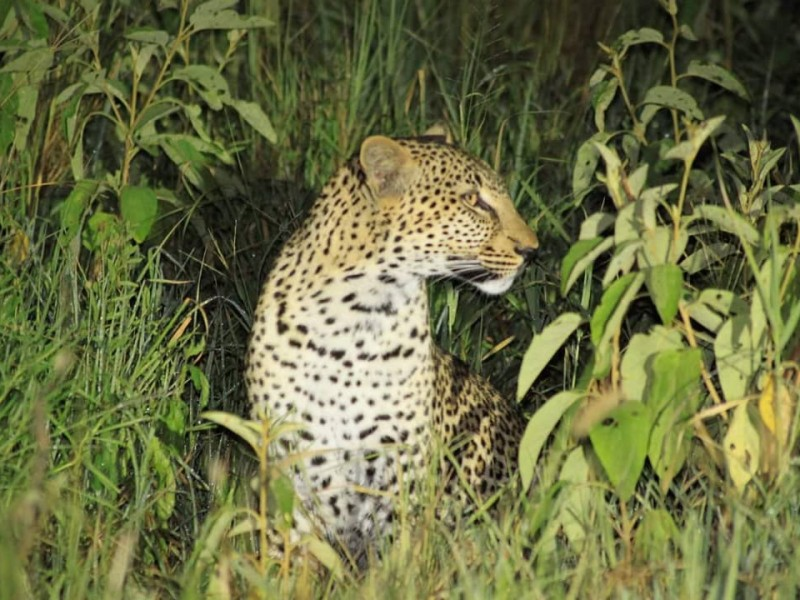 3 Days Nature tour itinerary for tanzania: Spot The Animal Life Of African Grasslands