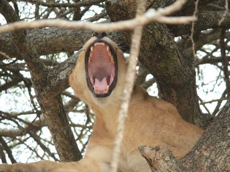 7 days Big five Safari