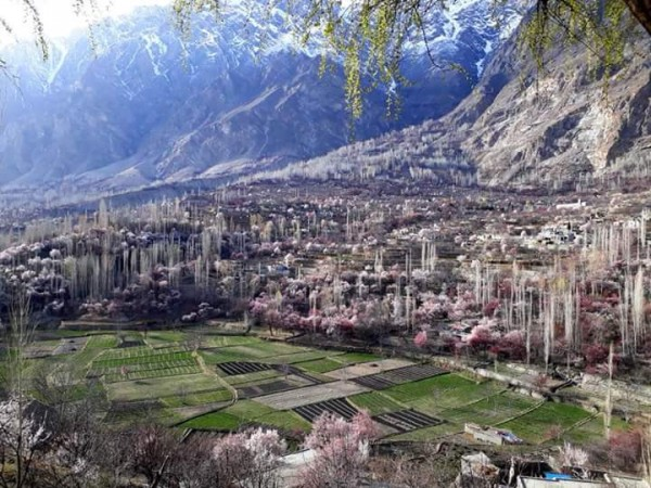 Hunza Valley Spring blossom tour north Pakistan