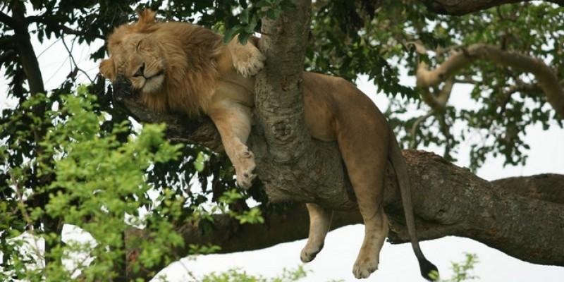 4 Day Bwindi Gorilla & Queen Elizabeth Safari
