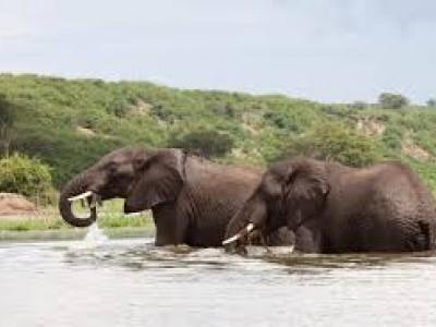 7 Days Bwindi Gorilla & Kibale Chimps Trekking & Wildlife Safari