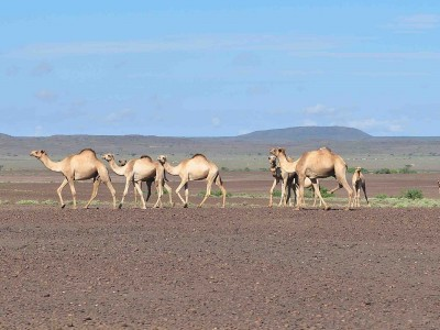 10 Days Lake Turkana Camping Safari Tours