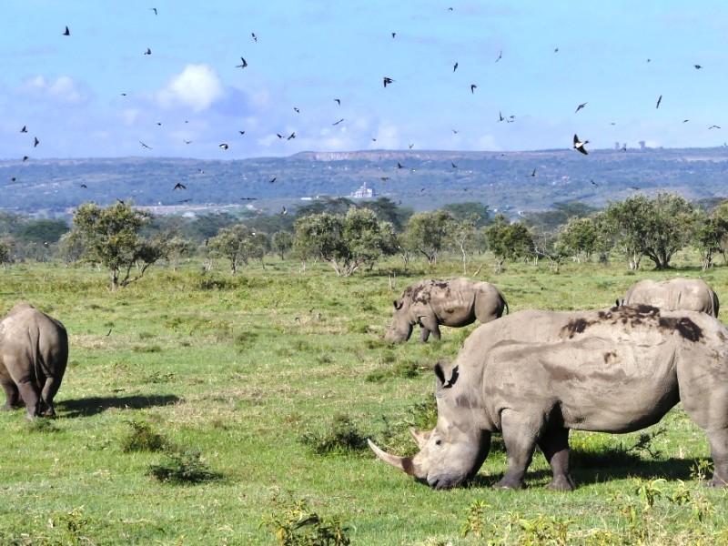 7 Days Kenya Budget Camping Safari Tours