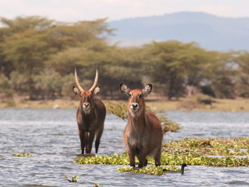 5 Days Kenya Budget Camping Safari Package