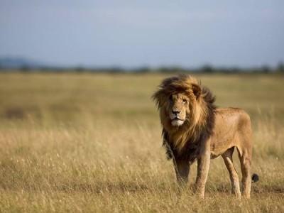 10 Days Great wildlife safaris Kenya and Beach Holidays