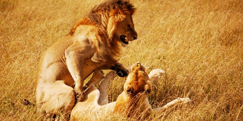 6 Days Masai Mara Lake Nakuru Budget Camping Safari