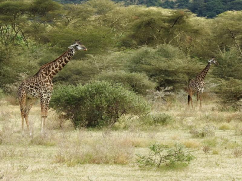 Tanzania Safari | 6Day Marvelous Safaris