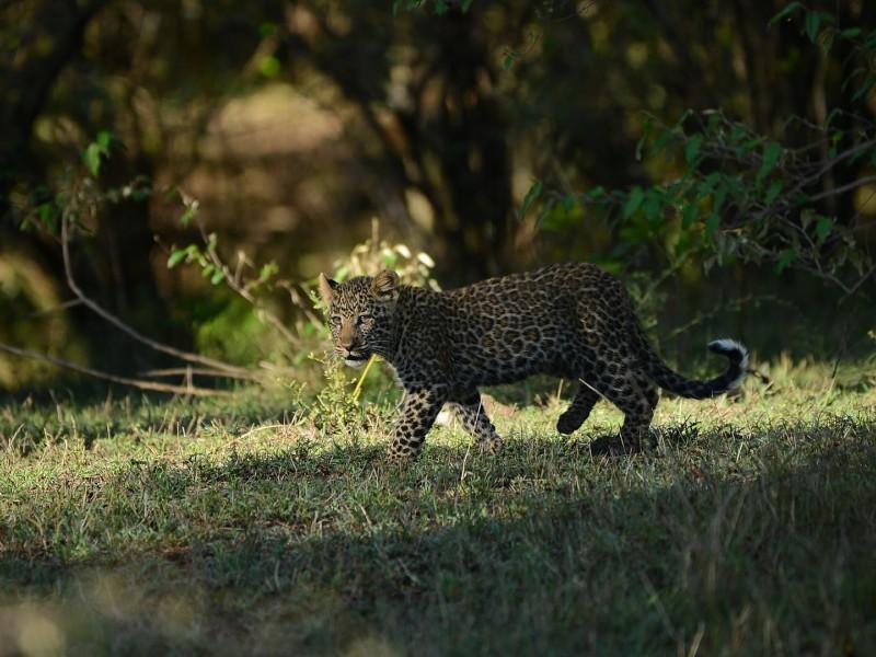 3 Days Masai Mara Budget Camping Safari Packages