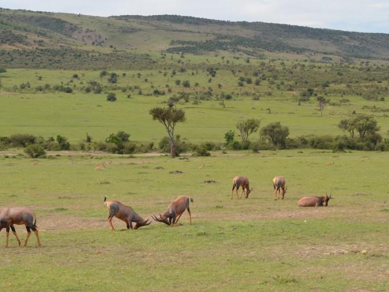3 Days Masai Mara Wildebeest Migration Safari Tours