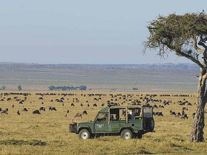 6 Days Masai Mara Lake Nakuru Budget Camping Safari