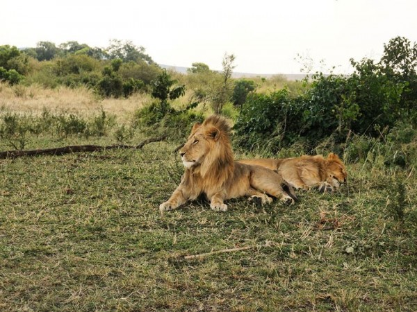 3-Day Special Offer Masai Mara Safari