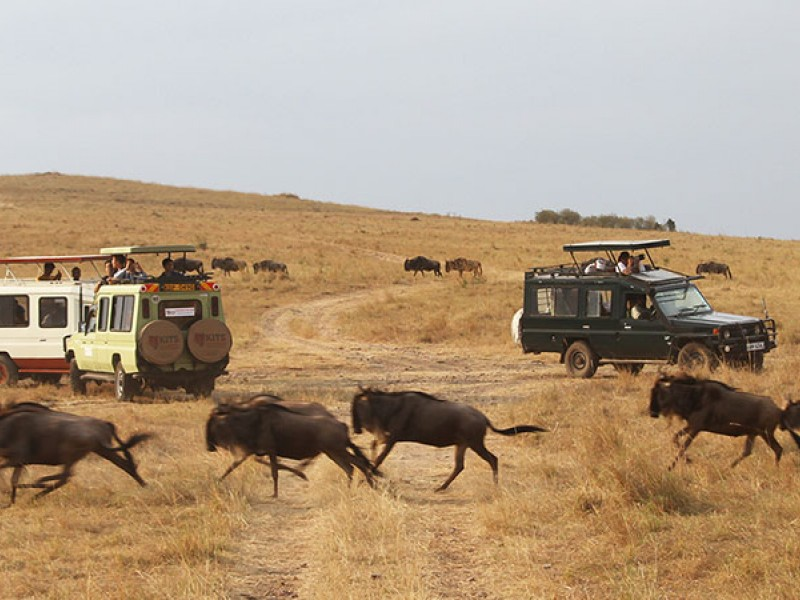 4 Days Masai Mara Budget Camping Safari Tours