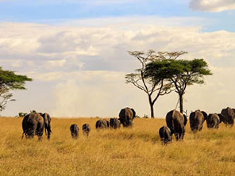 6Day Budget Tanzania Safari Packages