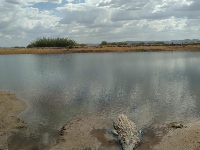 Half day Game drive near Windhoek