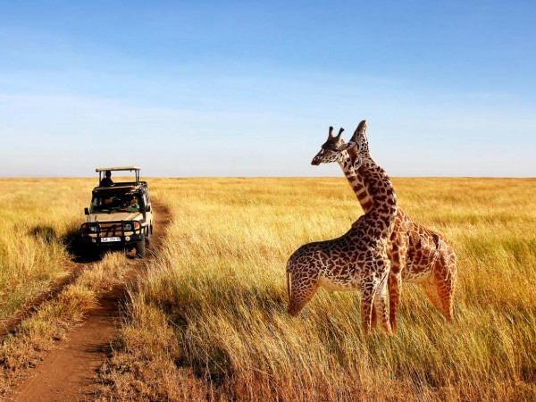 Tanzania Safari | 4Days Tanzania  Budget Safari Packages
