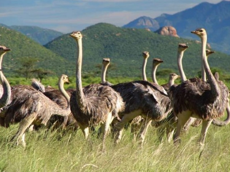 8 Days Safari Lake Turkana Safari Camping Adventure