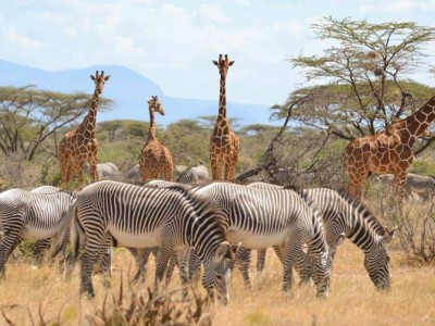 8 Days Lake Turkana Camping Safari Tours