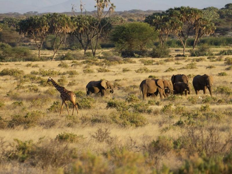 8 Days Kenya Family Safari Holiday