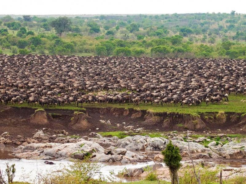 7 days/6 Nights Serengeti Migration Safari